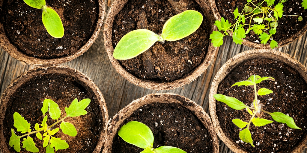 Photo of healthy seedlings depicts the value of the nonprofit lead nurturing tool.