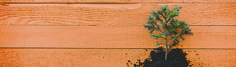 Evergreen sapling grounded on orange boards represents starting a new venture to use knowledge to change.